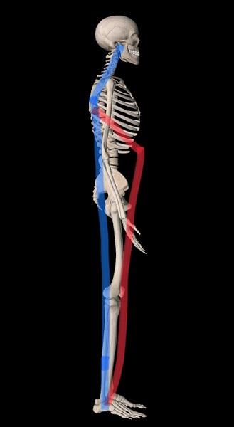 頸椎ヘルニアと脇の調整