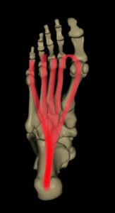 足底腱膜の筋肉